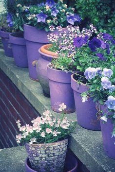 An all Lavender Garden painting pots purple
