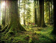 The Hoh Rain Forest, part of Olympic National Park in Washington State, is one of Nat Geo Traveler's 2014 Tours of a Lifetime. Photograph by Edmund Lowe Photography, Getty Images Trekking, Evergreen State, Beautiful Places In The World, Amazing Places, Day Hike, Photos Of The Week, Washington State, Western Washington, National Geographic
