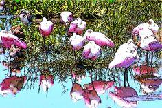 Spoonbill cartoon
