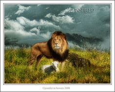 Lion and Lamb Wallpaper Lion And Lamb, Yahoo Images, Holy Spirit, Lions, Panther, Wallpaper, Gallery, Nature, Movies
