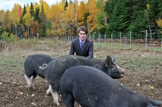 """The BIG List of Things you Should Know About Raising Pigs -- Our experience with raising pigs was a good one. In fact, we absolutely loved having them on our homestead. Our four Berkshire pigs were so entertaining to watch that we soon started referring to our relaxation time on the porch as """"pig TV"""". The pigs taught us lessons over the spring, summer and ..."""