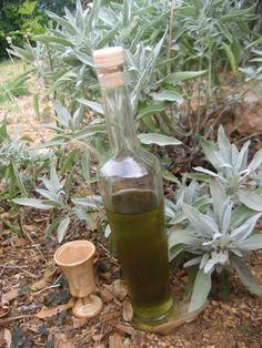SVE O KADULJI: Što liječi, kako se uzgaja i recepti za pripravu od čaja, rakije i vina do umaka, sira i čipsa
