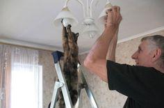 Helping dad changing light bulbs ...