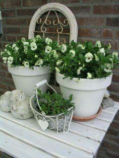 Violets ( by de witte lanteern) Spring Flowers, White Flowers, Beautiful Flowers, Moon Garden, Dream Garden, Front Garden Entrance, White Gardens, Green Plants, Summer Garden