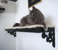 diy shelf on brackets for kitties