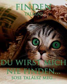 celiranyosnemetnyelvtudas (@celiranyosnemet) • Instagram-fényképek és -videók Cats, Movies, Movie Posters, Animals, Instagram, Gatos, Animales, Films, Animaux