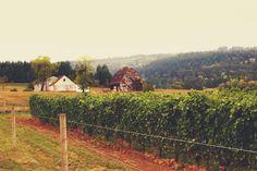 www.jodistilpphotography.com, landscapes, mighty creator, fall, vineyard, barns