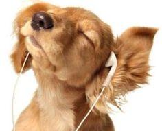 ingilizce dinleme calisma Günlük İngilizce Çalışma Dinleme Programı http://www.ingilizcetube.com/