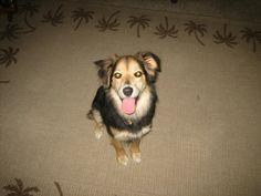 My cute dog!