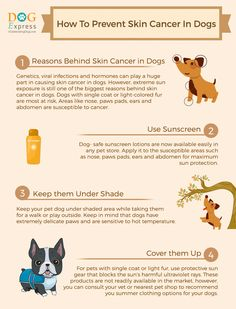 #Tips to Prevent Skin Cancer in Dogs #skincancerindogs #doghealth #infographics