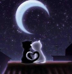 Romantica notte