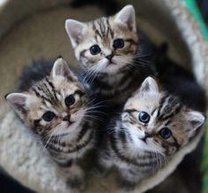 Wide eyed kittens <3