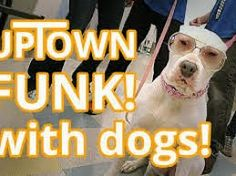 Talking Dogs at For Love of a Dog: #OaktownPup Parody of Uptown Funk by Bruno Mars | ...
