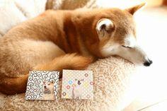 """柴犬, Shiba Inu <3 ~lisa. """"Shiba Inu""""pic(C)Copyrightsb.AllRightsReserved. ***""""Don't remove Copyright credits from the original pin with Copyright credits! ~Pinterest copyright team"""""""