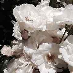 flowers, aesthetic, and white image Flower Aesthetic, White Aesthetic, Spring Aesthetic, White Flowers, Beautiful Flowers, Beautiful Bouquets, Happy Flowers, John Lennon, Illustration Botanique