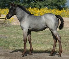 dark bay roan horse - Google Search