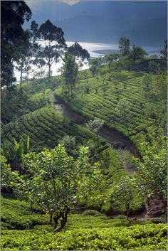 Tea plantation and lake, Sri Lanka