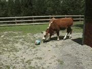 I Love This Ball...and I love the Bull:):) Put them together and I love what happens:):)