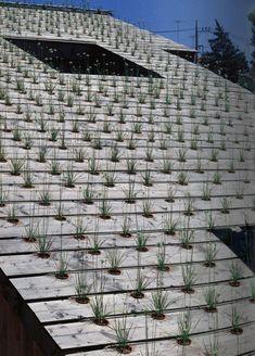 Green roof:  Fujimori Terunobu & Nobumichi Ohshima - Roof detail of the Nira House (Leek house)