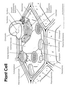Science Printables Archives - Page 2 of 6 - Tim van de Vall Blends Worksheets, Science Worksheets, Teaching Biology, Science Biology, Science Art, Plant Cell Drawing, Plant Cell Diagram, Animal Cell, Printable Animals