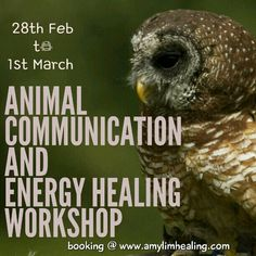 Animal Communication and Energy Healing Workshop  Singapore April  4th & 5th. Booking @ amylimhealing.com