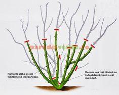 Cum se provoacă o nouă înflorire la orhidee Pruning Roses, Garden Pool, Growing Vegetables, Home And Garden, Herbs, Flowers, Gardening, Pools, Garden Ideas