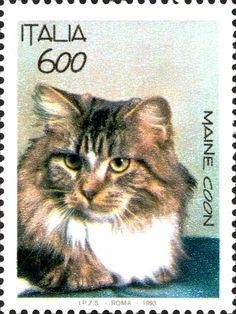 Cat stamp: Italy, 1993 (Maine Coon).
