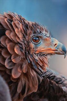"heaven-ly-mind: "" bird of prey """