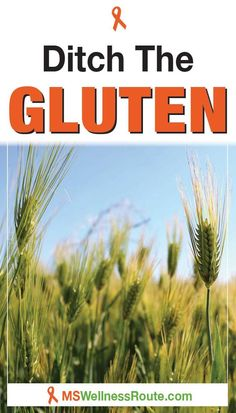 Gluten is now genetically modified which leads to systemic inflammation in many people. Here's why you should ditch gluten. #multiplesclerosis #beatmsnaturally #glutenfree Chronic Inflammatory Disease, Systemic Inflammation, Paleo Autoimmune Protocol, Autoimmune Disease, How To Eat Paleo, Healthy Foods To Eat, Banana Flour, Menu Online, Meat Salad
