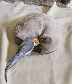 Kitty...preen my head, please
