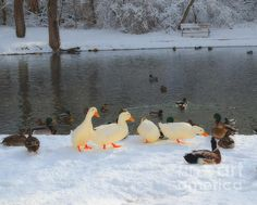 Wonderful photo by Luther Fine Art #photography #animals #ducks