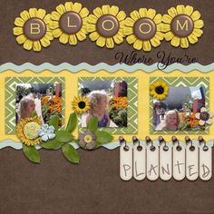 "Sweet ""Boom Where Your're Planted"" Sunflower Scrapping Layout...amyjo76? - gotta pixel."