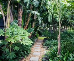 Awesome Awesome Ideas How to Make Small Tropical Backyard Ideas for you. This is 10 Ideas How to Make Small Tropical Backyard that will give your Outdoor Events more Fun and Decor Upgrade. Here, you'll also find yourself happy -I guess- when you want Tropical Garden Design, Tropical Backyard, Tropical Landscaping, Landscaping With Rocks, Tropical Plants, Backyard Landscaping, Backyard Ideas, Tropical Gardens, Garden Ideas