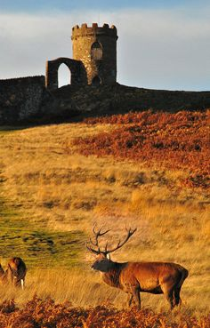 Old John, Bradgate Park Where Lady Jane Grey grew up. Now part of an 850 acre public park in the Charnwood Forest. Leicestershire.
