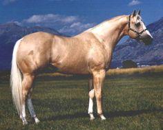 quarter horse stallion champions   2005 PHBA WORLD CHAMPION