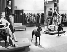 In 1955, a team four of Doberman pinschers guarded Macy's Herald Square store after hours. Two of them, Red Star and Mom, patrolled the women's dress department.