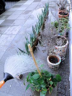 two lives Einklang / Werkstatt-Atelier: Pflanzenreihen-...