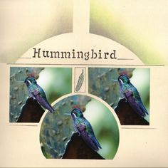 un colibri au Costa Rica