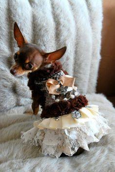 20732c51870c 86 Best dog clothing fashion images in 2013 | Dog clothing, Pets ...