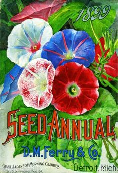 1899-Morning-Glories-Vintage-Flowers-Seed-Packet-Catalogue-Advertisement-Poster