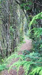 Image result for sequoia garden retreat Country Roads, Mountains, Garden, Nature, Plants, Travel, Image, Garten, Naturaleza