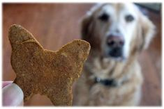 biscuit2 (3)                                                                                                                                                     Plus