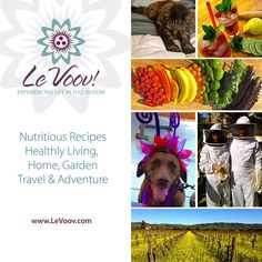 Visit us online at www.levoov.com #healthy #living #recipe #travel #adventure #wine #food #nutrition #garden #dog #cat #family #gourmet #organic #homemade #mushrooms #bee #artist #epicurean #leisure #avocado #restaurant #advice #cocktails #women #farmersmarket #foodie #sf #bayarea #champagne