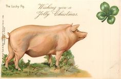 WISHING YOU A JOLLY CHRISTMAS  pig faces right, shamrock above right