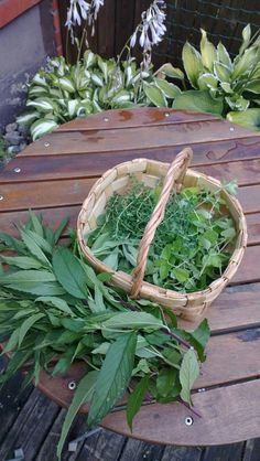 Herbs to drier