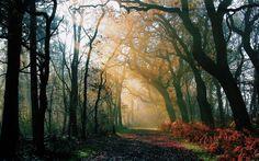 Natur Wald, Morgen, Herbst-, Straßen-, Licht-Strahlen, Sonne Hintergrundbilder - 1920x1200