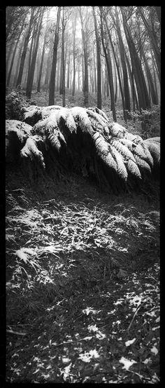 Joyce Evans, Mount Bulla Ferns, Victoria, 1996