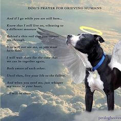 ♥A dog's prayer for a grieving human Dog Quotes, Animal Quotes, Dog Poems, Prayers For Grieving, I Love Dogs, Puppy Love, A Dogs Prayer, Miss My Dog, Pet Loss Grief