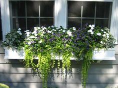 white flowers for window boxes | Window Boxes and Planters