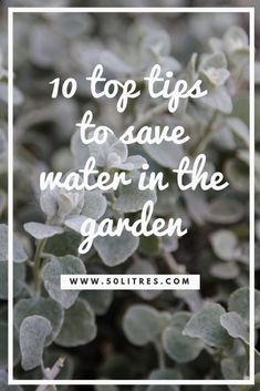 Ten top tips to save water in the garden - 50 Liters